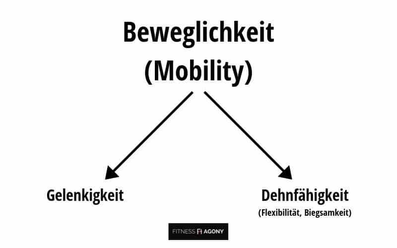Beweglichkeit trainieren verbessern Definition Übungen - Aufteilung der Beweglichkeit (Mobility) in Gelenkigkeit und Dehnfähigkeit